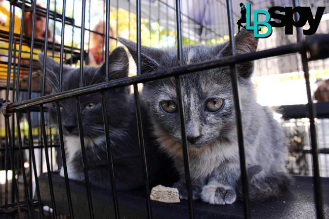 Toot 29 Kittens LBSPY