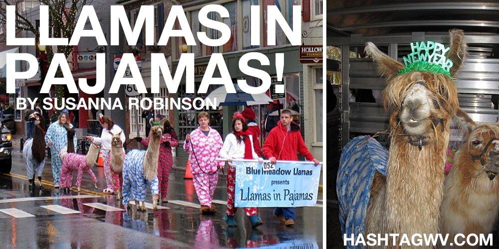 llamas-in-pajamas